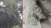 ঝালকাঠিতে ধান খাওয়ার কারণে পাখির নীড়ে আগুন, পাখিপ্রেমিদের ক্ষোভ
