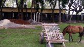 নাগরপুরে ছাগল-ভেড়া, ঘোড়া আর নির্মাণ সামগ্রীর দখলে বিদ্যালয় মাঠ
